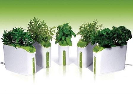 Выращивание зелени дома своими руками