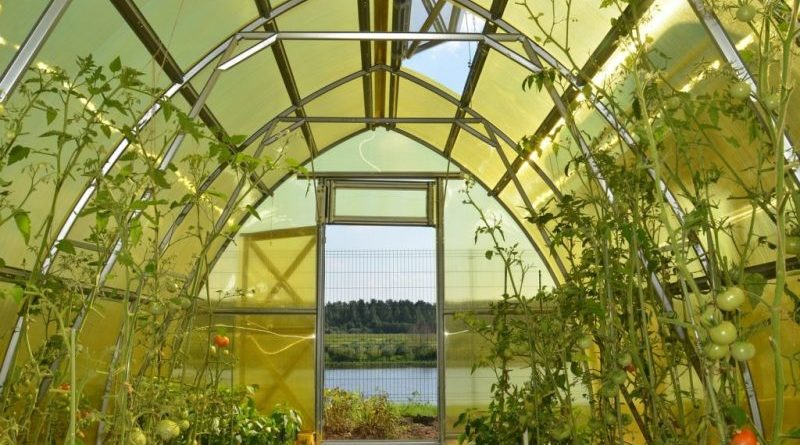 Домашняя теплица как способ для сбора раннего урожая