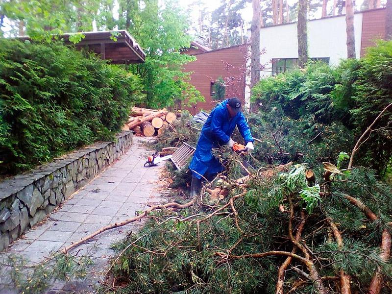 Зачем нужна регулярная расчистка участка от деревьев и кустарников?
